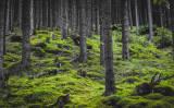 Green Forest Moss