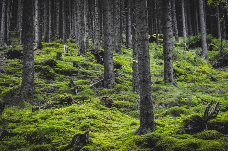 green wood moss