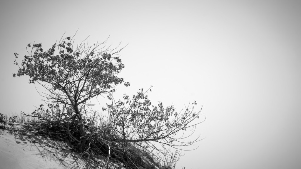 lonely tree sand dunes