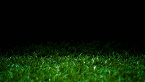 green grass display background