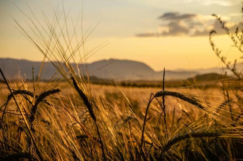 crop fields mountain background