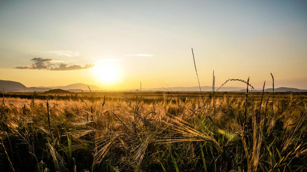 field crops sunset landscape