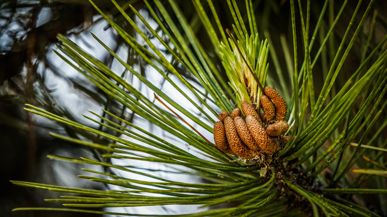 Pine Cones - Nature Hands photo ⋆ photo@bstrakt